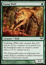 1 x giovani Wolf - RARO - Dark Ascension - MTG - NM - Magic The Gathering