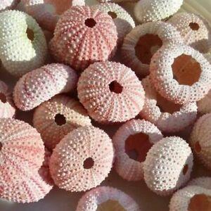 Natural Sea Urchin Seashell Mediterranean Style Home Decoration Organic Material