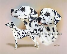 Dalmatian Multistudy Giclee Print by Robert J. May