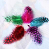 50x Dyed Guinea Hen Feather Chicken Feathers Craft Party Dress UP Decoration