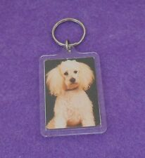 WHITE POODLE -  KEY CHAIN - PHOTO IN PLASTIC CASE