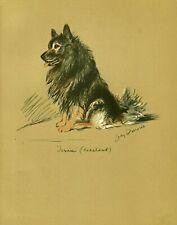 More details for keeshond original old 1937 dog art print artist lucy dawson