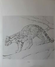 "Frances  Lee Jaques-""OCELOT"",1949 -Wildlife Art Print-Offset Lithograph 11.5x10"