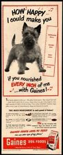 1948 Gaines Dog Meal - Cute Norwich Terrier Puppy Dog - Pet - Animal Vintage Ad