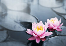 BEAUTIFUL LOTUS FLOWERS CANVAS PICTURE #2 STUNNING FLORAL HOME DECOR A1 CANVAS