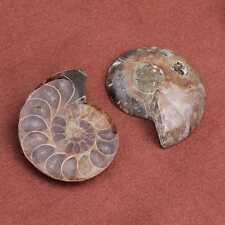 2pcs Charm Natural Ammonite Fossil Stone Pendant Beads Pendant Jewelry Making