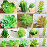 Fruit Garden Succulent Grass Desert Artificial Plant Landscape Fake Flower Home