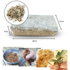 Sphagnum-Moos Feuchtigkeits-6L Für Phalaenopsis-Orchidee Befeuchtet Garten Neu