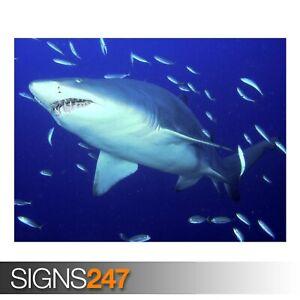 PREDATOR SAND TIGER SHARK (3650) Animal Poster - Poster Print Art A1 A2 A3 A4