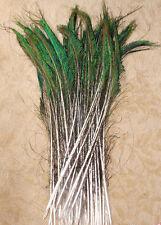 10 Natural Iridescent Peacock Sword Feathers Long 30-38