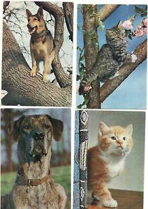 15 VINTAGE DIXON postcards:   CATS & DOGS