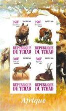 ** African Animals rhino bushpig antilope antelope Tchad 2010 MNH IMPERF  #B273