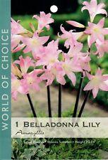Amaryllis Belladonna Lily Pink Naked Ladies Bulb - 1 - Please Read Description