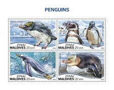 Maldives 2018  Penguins fauna  S201808