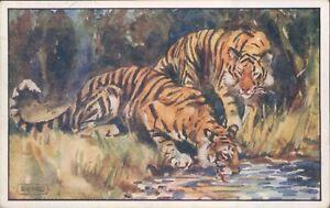 Postcard Tigers  Wildlife Humphrey Milford card Posted 1922