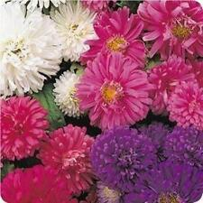 Aster Giant Perfection Seed Mixed Colours Good Cut Flower Showy Annual