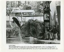 MIKE DOUGLAS MARTY ALLEN DOLPHIN SEA WORLD THE MIKE DOUGLAS SHOW 1973 TV PHOTO