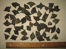 Lot of 50 Dried Water Chestnut Devil Seed Spiky Pod Gargoyle Bat Nut EXTRA WORN