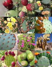 OPUNTIA CACTUS MIX, rare prickly pear cacti desert tuna succulents seed 20 SEEDS