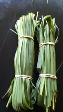 16 OZ Fresh Organic Garden Edible Lemon Grass Leaves Tea Green Cut, in Florida