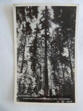 Vintage Black White Photo Postcard Founders Tree Humboldt Redwood State Park Ca