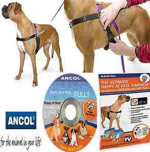 Dog Harness Lead Set Ancol PDL PET Happy at Heels 4 Sizes SMALL - MED - LARGE-XL
