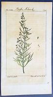 1774 Comte de Buffon Antique Botanical Print of Pine Branch & Flowers