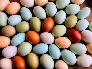 Bunte Bruteier 6, reinrassige Araucana, Marans Mooshühner grüne blaue oliv Eier