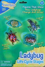 Ladybird/Ladybug del ciclo de vida huevos, larva, pupa, Escarabajo ciclo de vida-minibeasts