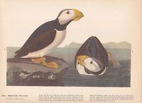 """1942 Vintage AUDUBON BIRDS #92 /""""PIGEON HAWK/"""" Color Art Plate Lithograph"""