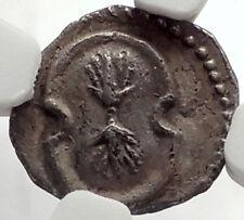 TARSOS Satrap Balakros in CILICIA 333BC Silver Greek Coin ATHENA - NGC i67074