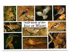 Wild Birds of The Isle of Wight - Postcard