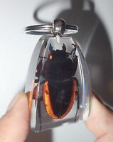 Insect Large Key Ring Golden Stag Beetle Odontolabis cuvera Specimen SK12 Clear