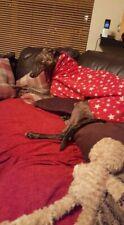 "dog Snood jumper fleece house coat whippet lurcher Greyhound red star 20"""