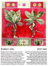 Cancer, the tribe of Reuben, Ruby birth stone, Jewish Horoscope postcard.