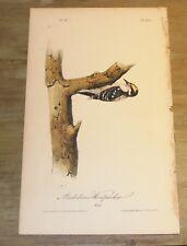 Birds of America.  Audubon. Audubon's Woodpecker. 1st ed.