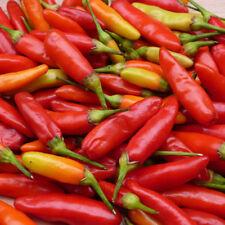 RE semi-pepper (peperoncino) TABASCO - 50 Semi