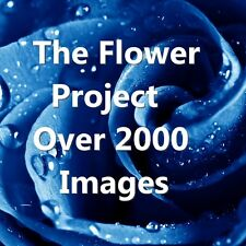 2000+ Flower Images For Card Making - Decoupage - Upcycling Projects - DOWNLOAD