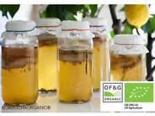Organic JUN Champagne Kombucha Scoby Starter Tea  Probiotic by Kombuchaorganic®