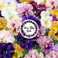 Stiefmütterchen ROCOCO  30 Samen Blumen mehrjährig VIOLA Blumensamen Farben Mix