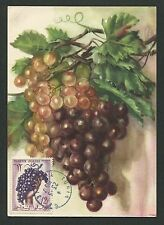 TUNESIEN MK 1957 FLORA TRAUBE GRAPE UVA WINE MAXIMUMKARTE MAXIMUM CARD MC d3806