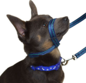Gencon Clip To Collar Headcollar Right and Left Handed Anti Pull Training Lead