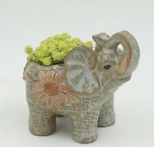 New Ceramic pot elephant Cacti Succulent Plant Pot Flower Planter Mini Garden
