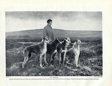 SCOTTISH DEERHOUND DOGS AND LADY OWNER ON MOORS OLD ORIGINAL 1934 DOG PRINT PAGE