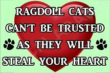 RAGDOLL CATS CAN'T BE TRUSTED THEY WILL STEAL YOUR HEART FRIDGE MAGNET CAT