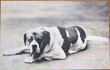 St./Saint Bernard Dog 1910 Realphoto Postcard, Studio-Shot #3