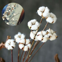 Cotton Dried Flowers Natural Plant Party Room Handmade White Table Ornaments