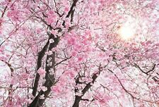 NON WOVEN giant wallpaper 368x248cm Flowers Pink tree Wall Mural for bedroom