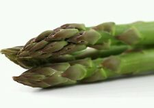 ☺100 graines d asperges vertes