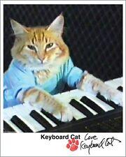 Keyboard Cat Autographed Glossy Head Shot (Fatso)